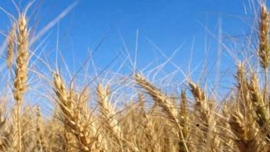 Dos mil 700 productores fueron beneficiados por SAGARPA