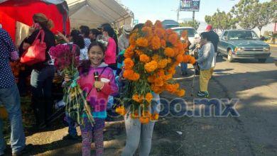 """También la flor conocida como """"terciopelo"""" o """"mano de león"""", se vende a 90 pesos, cuando el manojo suele costar entre 10 y 20 pesos (FOTOS: FRANCISCO ALBERTO SOTOMAYOR)"""