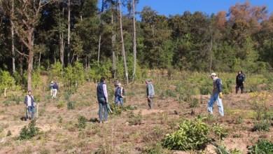 El operativo se realizó sobre una extensión de 4 hectáreas, de las cuales, dos tenían plantaciones de aguacate; en las restantes se encontró indicios recientes de tala ilegal, árboles incinerados, remoción de suelo y desplante de material vegetal nativo.