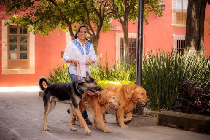 Luisa María Calderón manifestó que a pesar de que ya existe una legislación local que prohíbe la venta, abandono y mutilación de animales, las sanciones no se aplican
