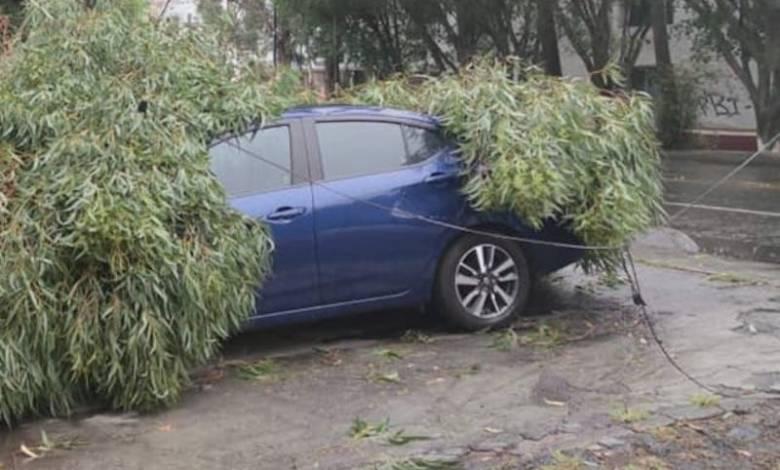 cae árbol, auto,