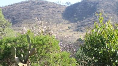 Cerro del Punhuato
