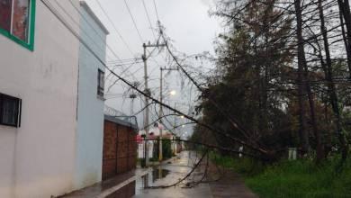 lluvias, Morelia, cae árbol