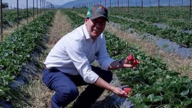 Agricultura Sustentable, fresa