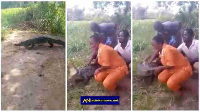 crocodile bites woman