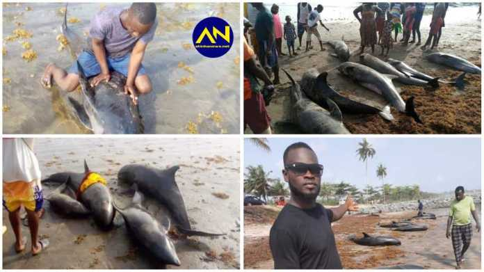 0 dolphins and large numbers of different species of fish have washed ashore along the coasts of Axim-Bewire