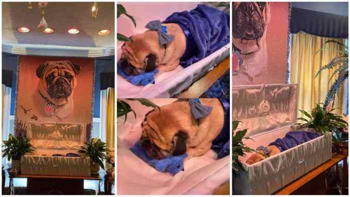 Man organizes posh burial for his dead dog