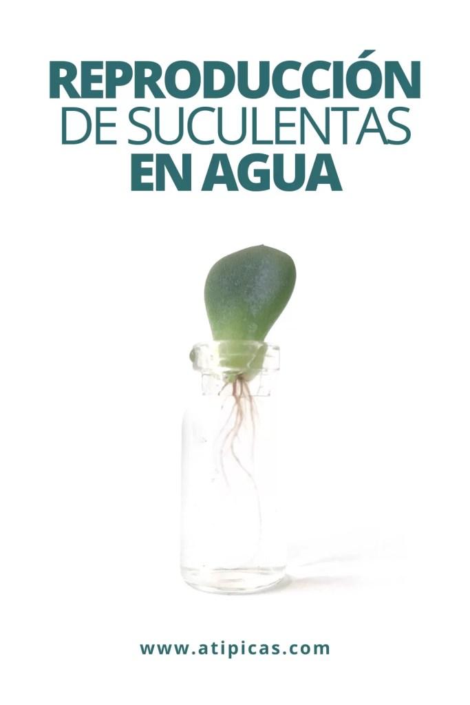 Reproducción de suculentas en agua