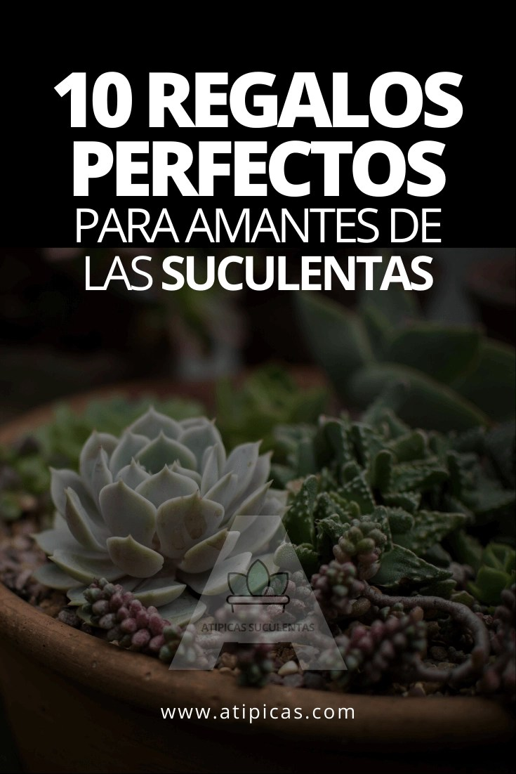 10 regalos perfectos para amantes de las suculentas
