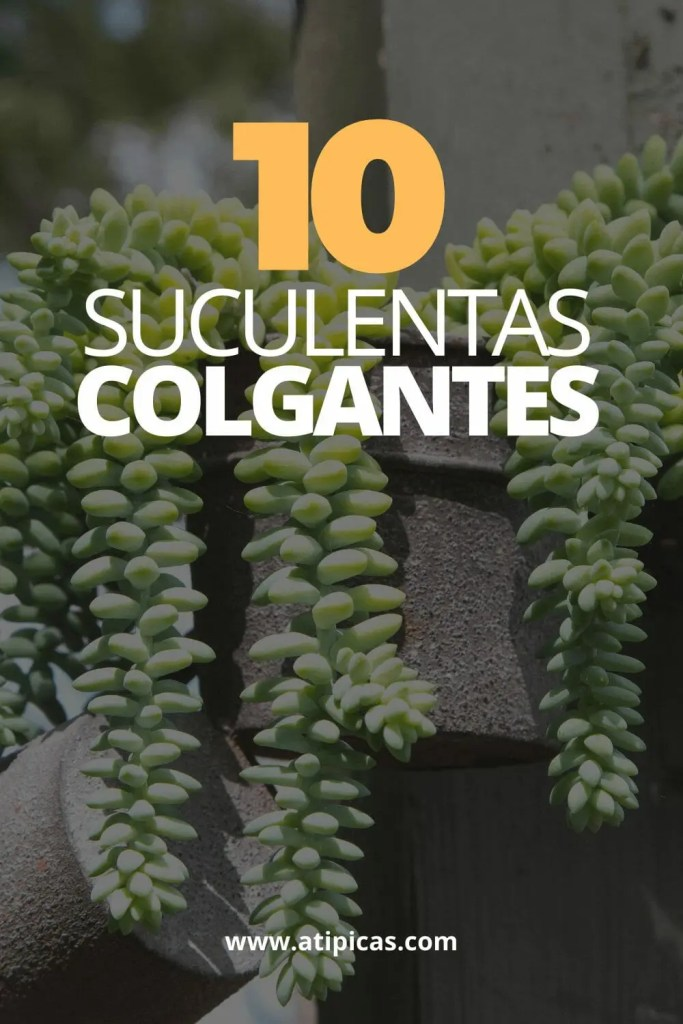 10 plantas suculentas colgantes