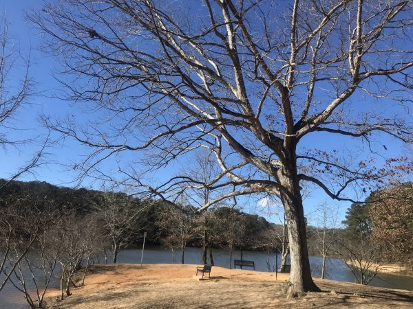 A scenic view of Murphey Candler Lake on a clear winter day.