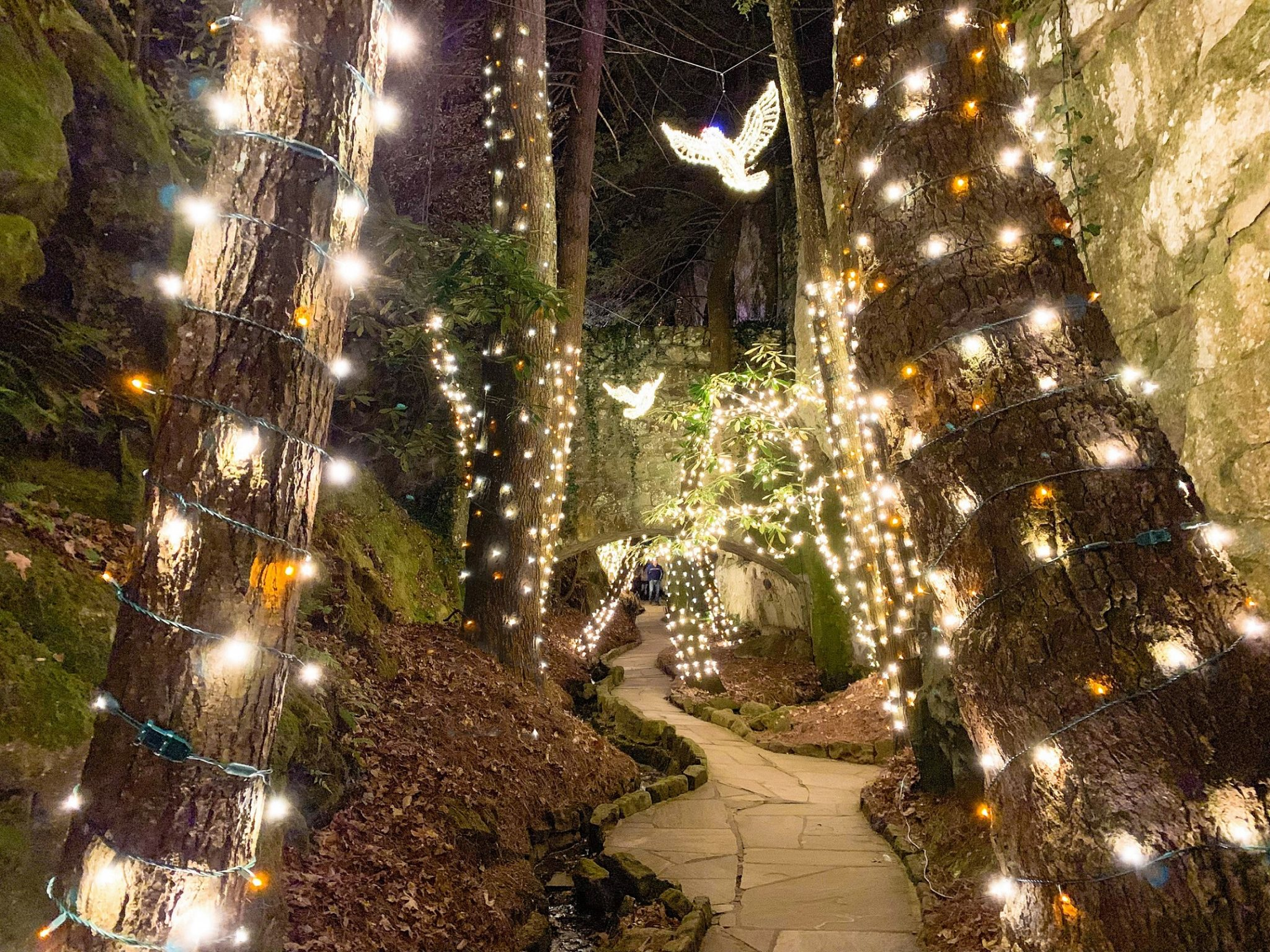 2020 best holiday lights and tree