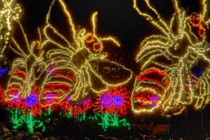 Brilliant Bugs at the Garden Lights. Photo by Joey Ivansco
