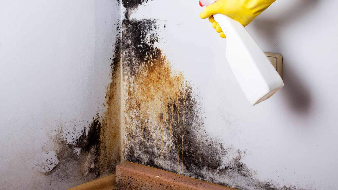 Remove Mold At Home