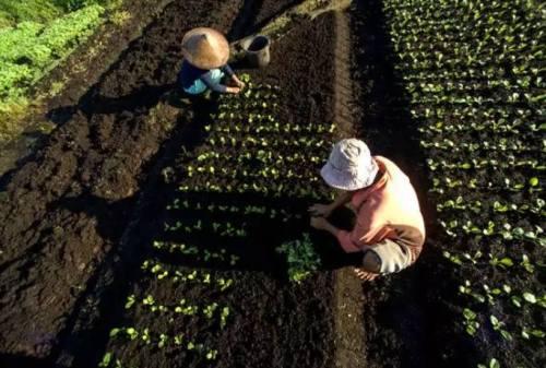 Perubahan Iklim Membuat Bahan Makanan Lebih …