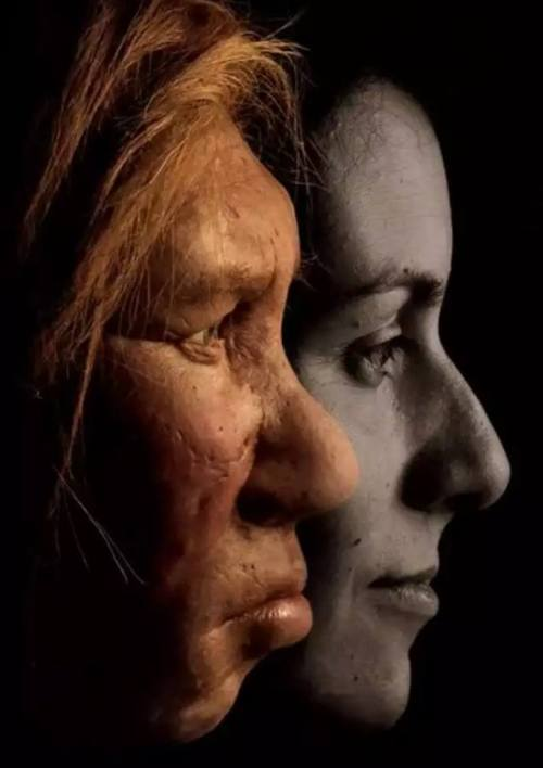 Keluar dari Afrika, Jatuh ke Pelukan Neanderthal