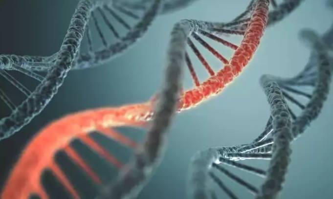 Modifikasi Gen Embrio Manusia Berhasil Dilakukan …