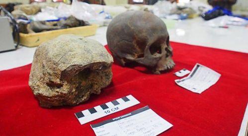 Tengkorak Homo Erectus Ditemukan di Jawa Tengah …