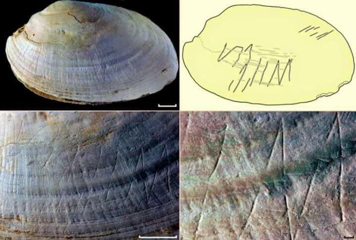 Goresan seni cangkang tertua di dunia …