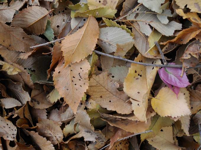2013-11-27-raked-leaves-by-a-sacca-2