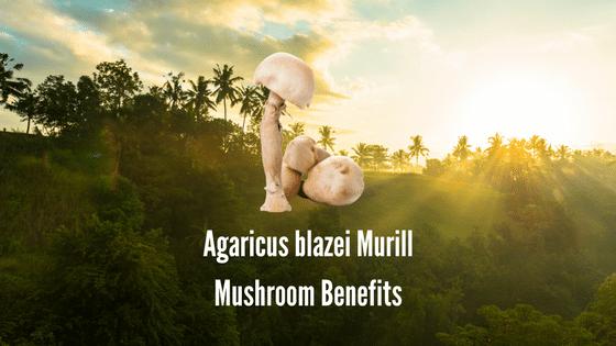 Agaricus Blazei Health Benefits