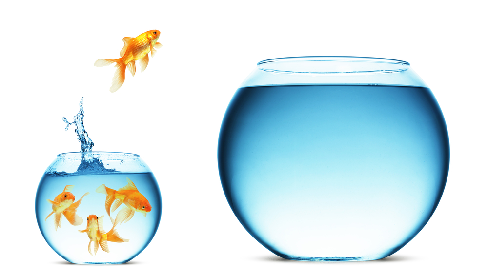 Goldfish jumping - New idea - Different perspective - IMAP - JMAP - Rafael Laguna - Dave Richards - atmail - OX