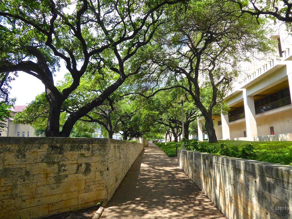 Live oaks and the ransom center university of texas austin texas