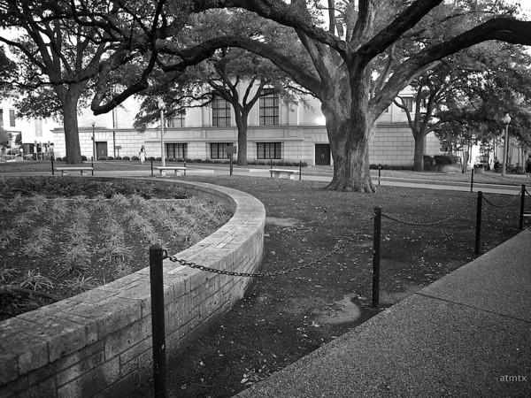 Grand Tree, University of Texas - Austin, Texas