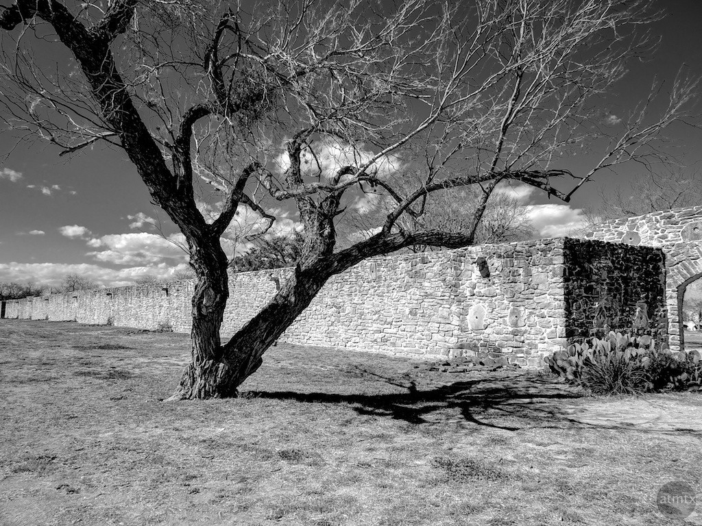 Tree with Character #3, Mission San Jose - San Antonio, Texas