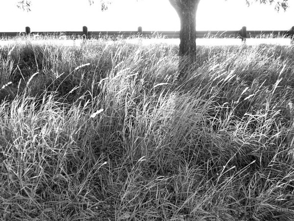 Backlit Highway Grass - Austin, Texas
