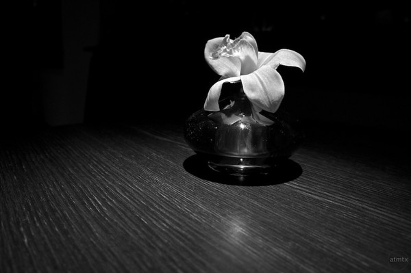 Single Flower in Black and White