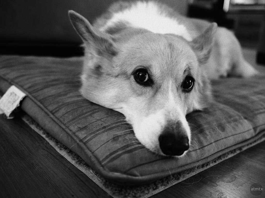 Lucky's Black and White Portrait - Austin, Texas