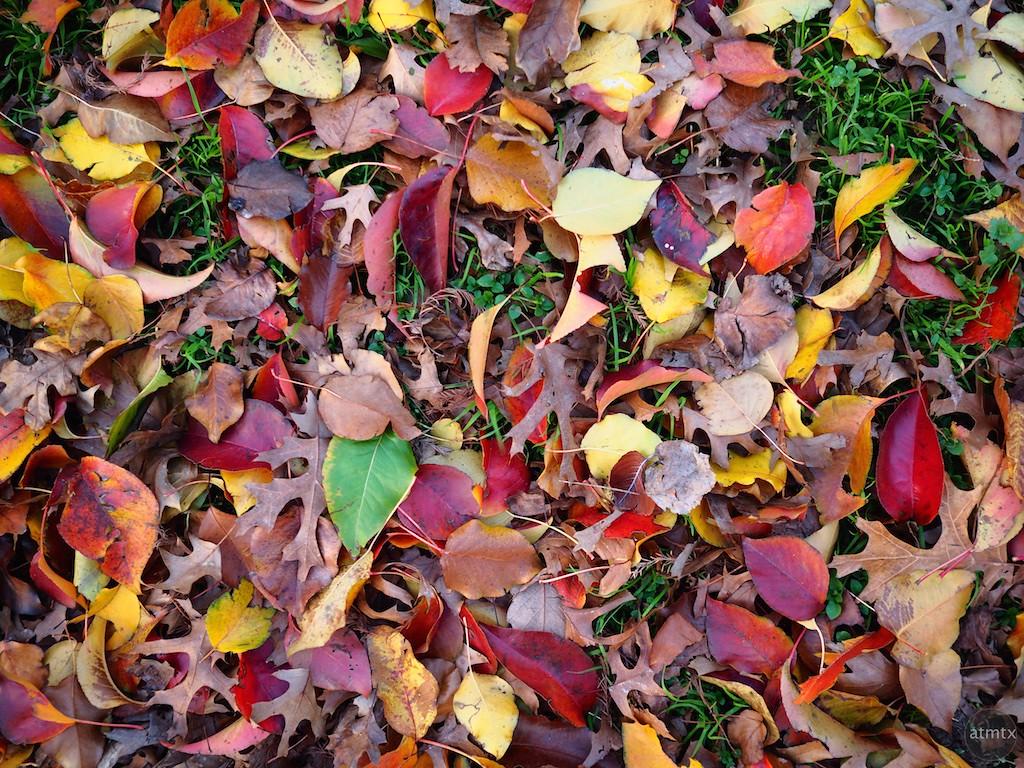 Leaf Assortment - Austin, Texas (saturated color)