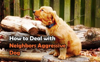 stop neighbor dog barking, how can i get my neighbor's dog to stop barking, neighbor dog barking, can the police take my dog away, neighbor leaves dog outside all day, how to deal with neighbors aggressive dog, how to keep your neighbor's dog out of your yard, how to stop neighbor dog from barking, how to keep neighbors dog out of my yard, how to handle an aggressive dog, how to deal with neighbors barking dog, neighbors let their dog run loose, what to do about neighbors barking dog, stop neighbor dog from barking, what to do if my neighbors dog wont stop barking, can i sue neighbor for barking dog, who do i call to complain about a barking dog,
