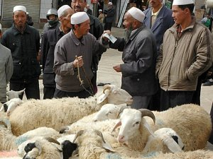 Sheep haggling
