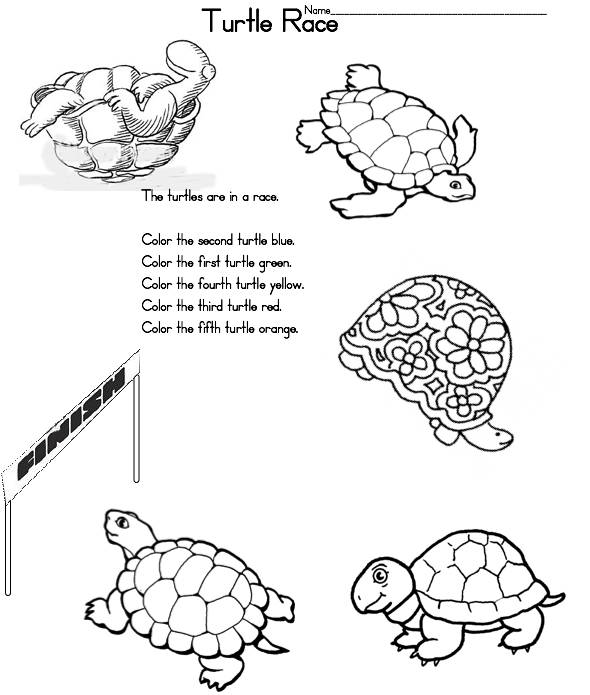 Printable Turtle Life Cycle Of A Turtle