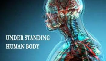 Watch Human Anatomy and Physiology Video Full Course