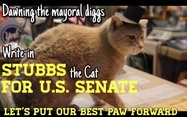 stubbs the mayor cat