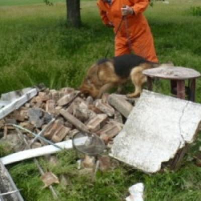 Accelerant Dog Detect