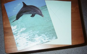Invite kids to dive into summertime learniing with vacation stations like Dolphin Cove.