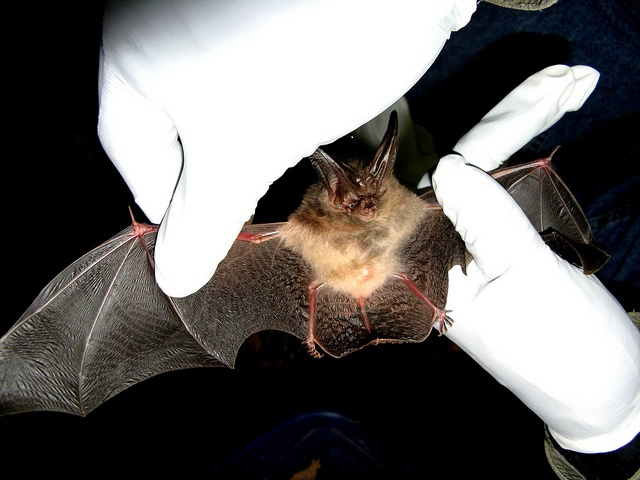 How To Get Rid Of Bats In Your House 1