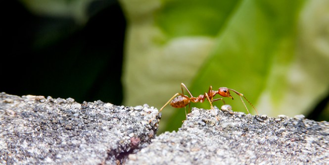 How To Get Rid Of Ants Naturally Using Baking Soda
