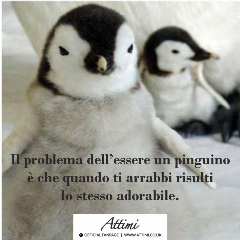 Il problema dell'essere un pinguino …