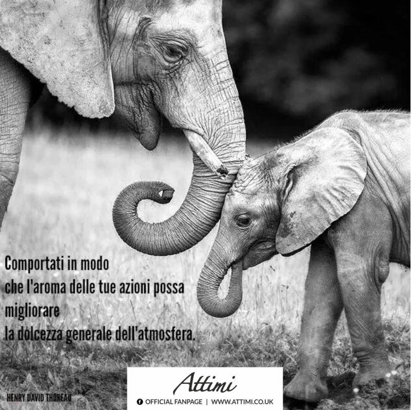 Comportati in modo che l'aroma delle tue azioni possa migliorare la dolcezza generale dell'atmosfera. ( Henry David Thoreau )