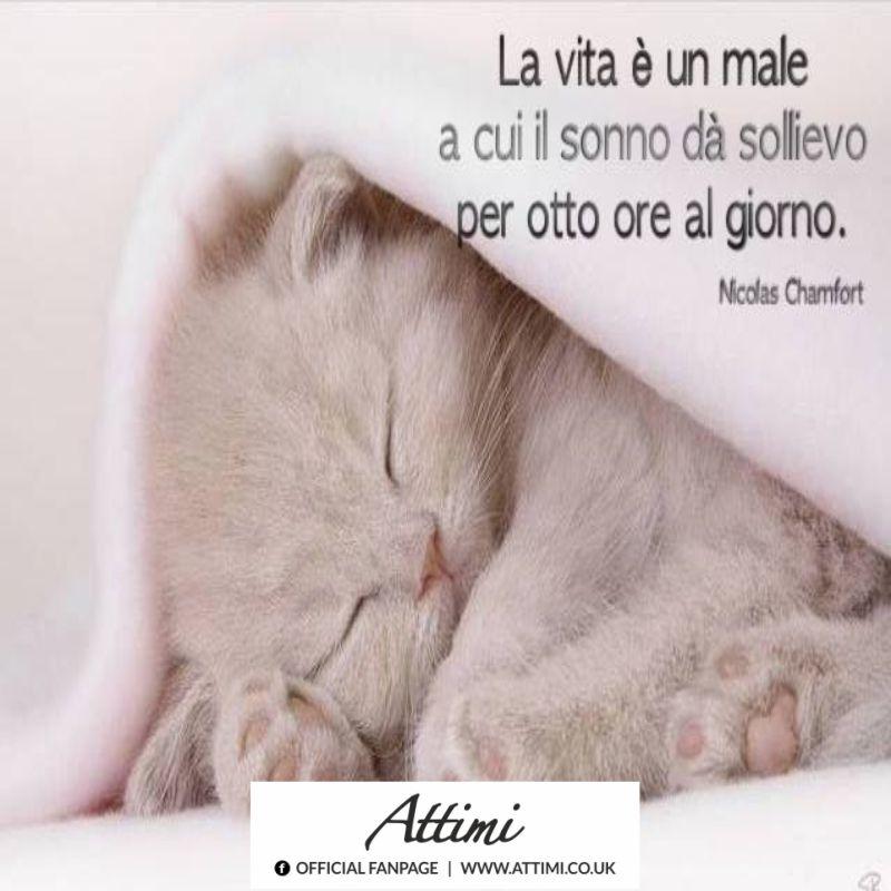 La vita è un male a cui il sonno dà sollievo per otto ore al giorno. ( Nicolas Chamfort )
