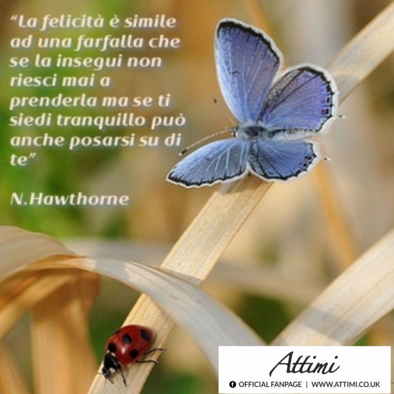 La felicità è simile ad una farfalla che se la insegui non riesci mai a prenderla ma se ti siedi tranquillo può anche posarsi su di te. (N. Hawthorne)