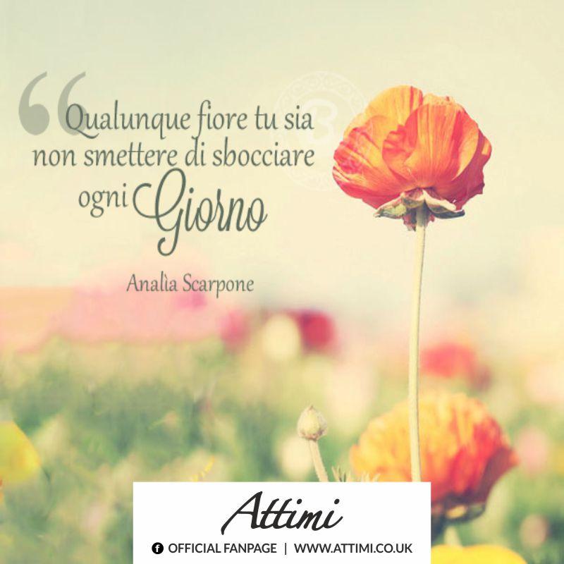 Qualunque fiore tu sia  non smettere di sbocciare ogni Giorno. (Analia Scarpone)