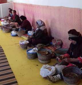 women argan oil collective
