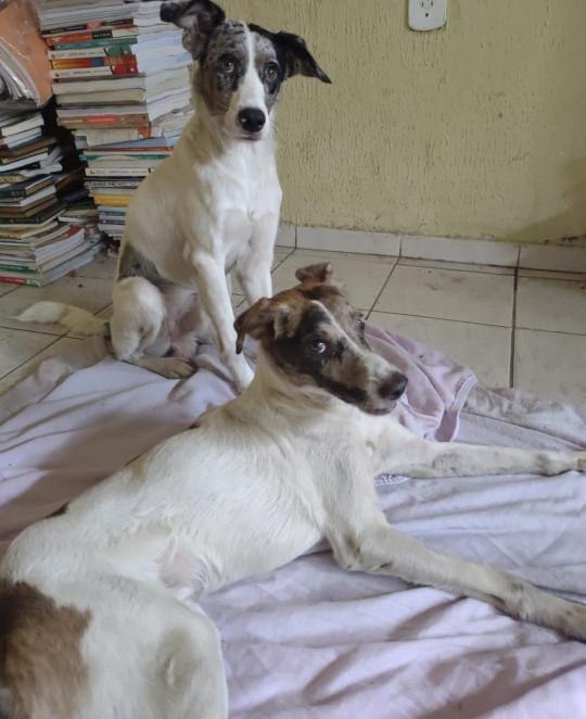 Un perro cuida a su amigo que fue atropellado y no se separa de él - ATV