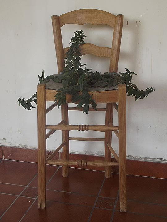 Chaise plantée